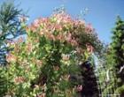 Растительные композиции. Посадка ягодных кустарников