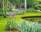 Парк цветов «Keukenhof»