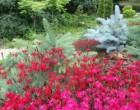 Гвоздика в саду. Сорта гвоздики