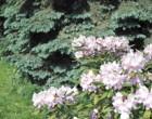 Сказка скрыта за оградой Ботанического сада