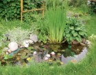 Водоем на дачном участке «Пленочный пруд»